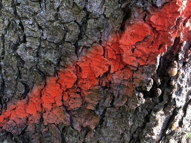 Foto: Martin Heß 2020, Baumzeichen