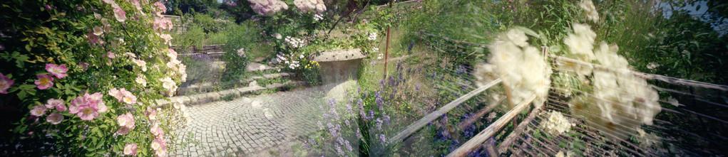 Ile Verte, Dans la roseraie, 2010, L120 cm x H37 cm, 1/30, © Annick Maroussy