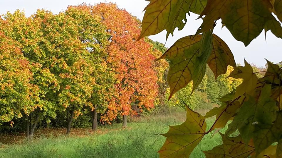 """""""Die Fantasie ist ein ewiger Frühling"""" (Schiller). Schöner Trost. Trotzdem hat der Herbst auch schöne Seiten."""