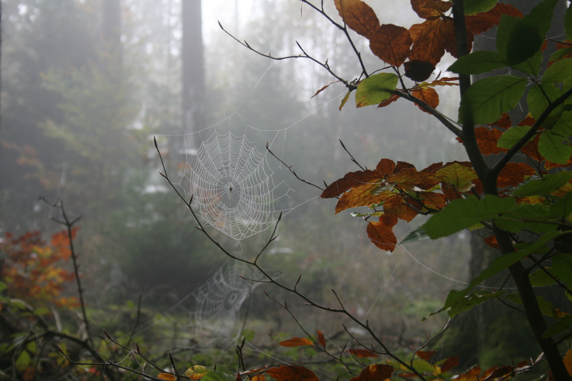 Der Herbst zeigt sich von seiner mystischen Seite.