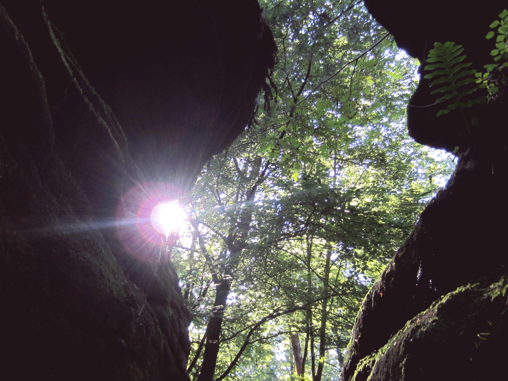 """""""Der Wald gab seine Geheimnisse nicht so leicht preis. Er hütete sie wie eine Drachenmutter ihre angriffslustige Brut. Nur, um sie im richtigen Moment loszulassen."""" (Lichtsturm)"""