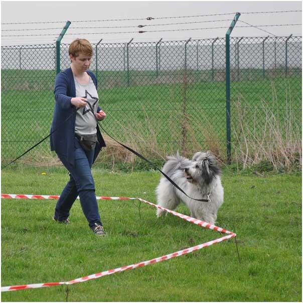 Schöne Aufmerksamkeit des Hundes - so soll es sein!