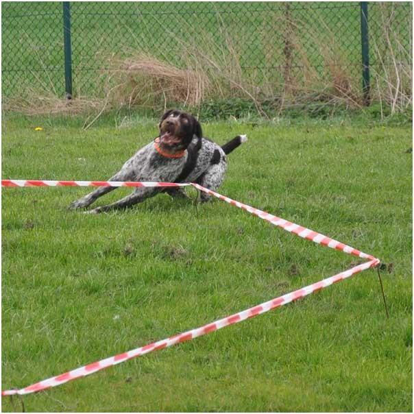 So sieht es nach vielem Üben später mal aus: der Hund wird frei geschickt