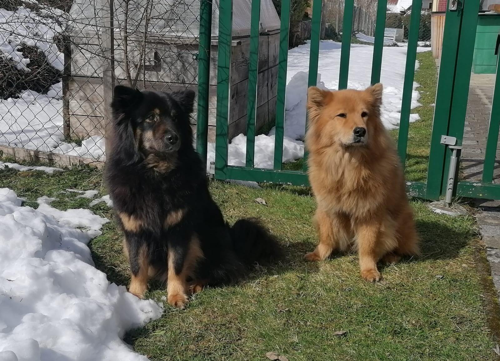 Amicelli & Bijou