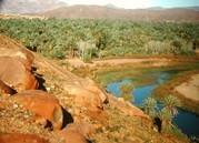 Palmeraie de la vallée du Drâa