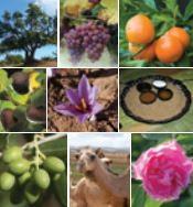Catalogue national des produits du terroir du Maroc