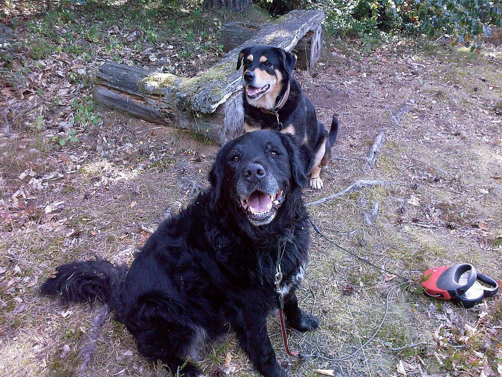 Chico und Apache 2007