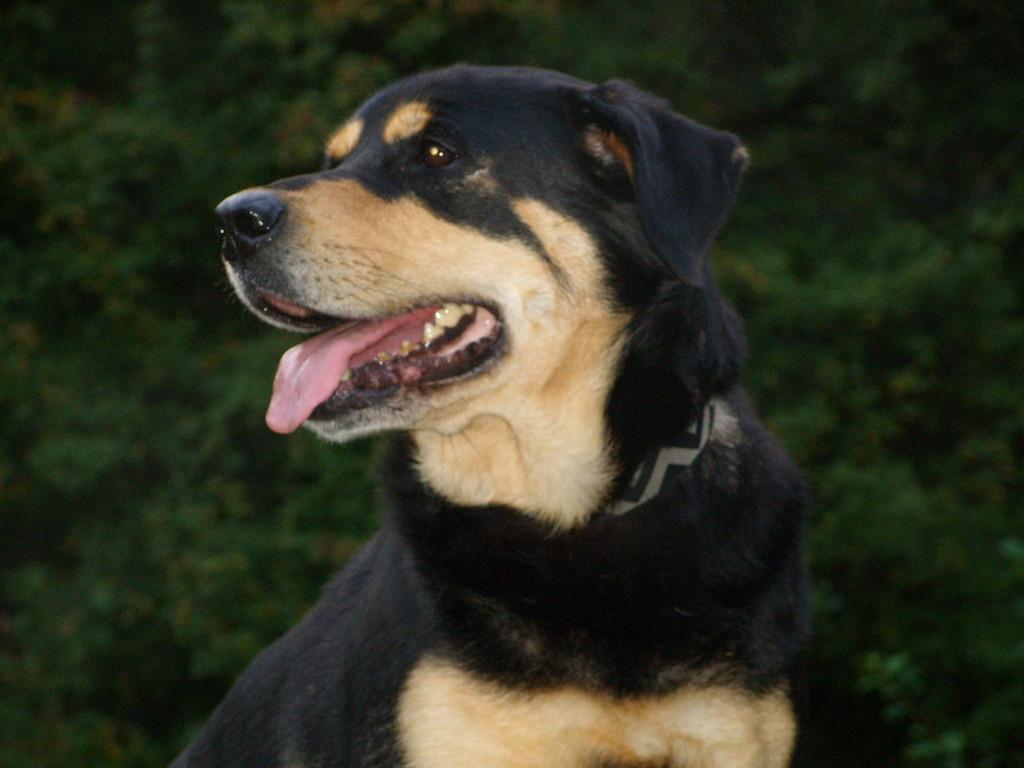 Apache, Besitzerin Helga Hubert - verstorben am 16.09.12