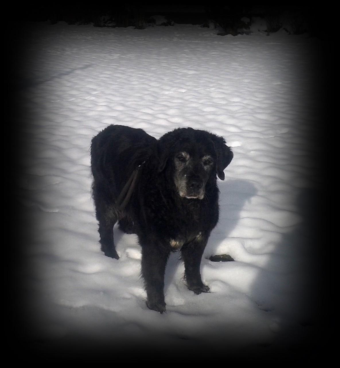 er liebte den Schnee..