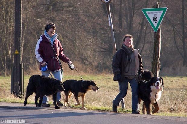 Herbst 2008 zu Gast bei den Hundefreunden Hochwald
