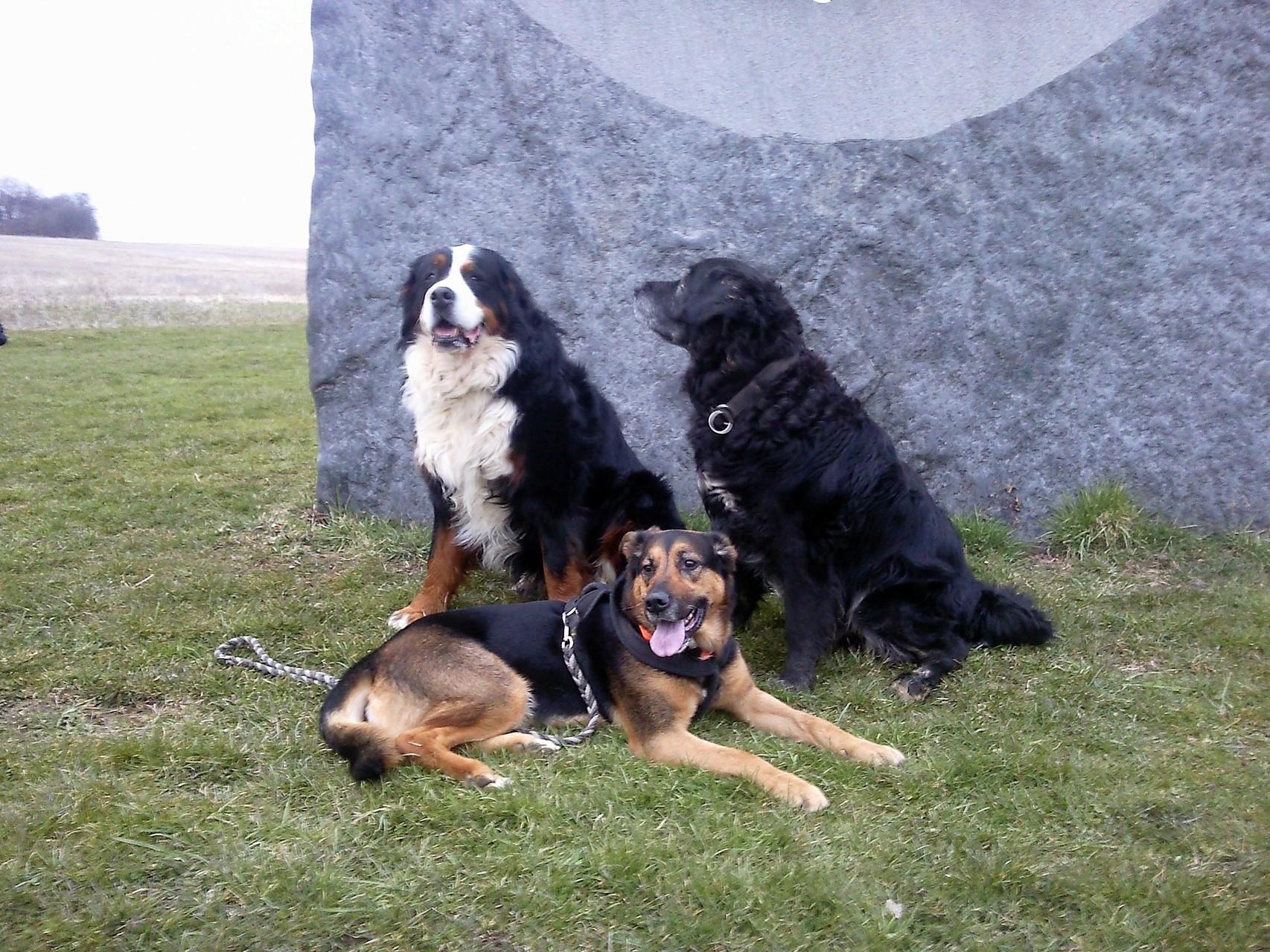 Chico und seine besten Freunde....(2013)