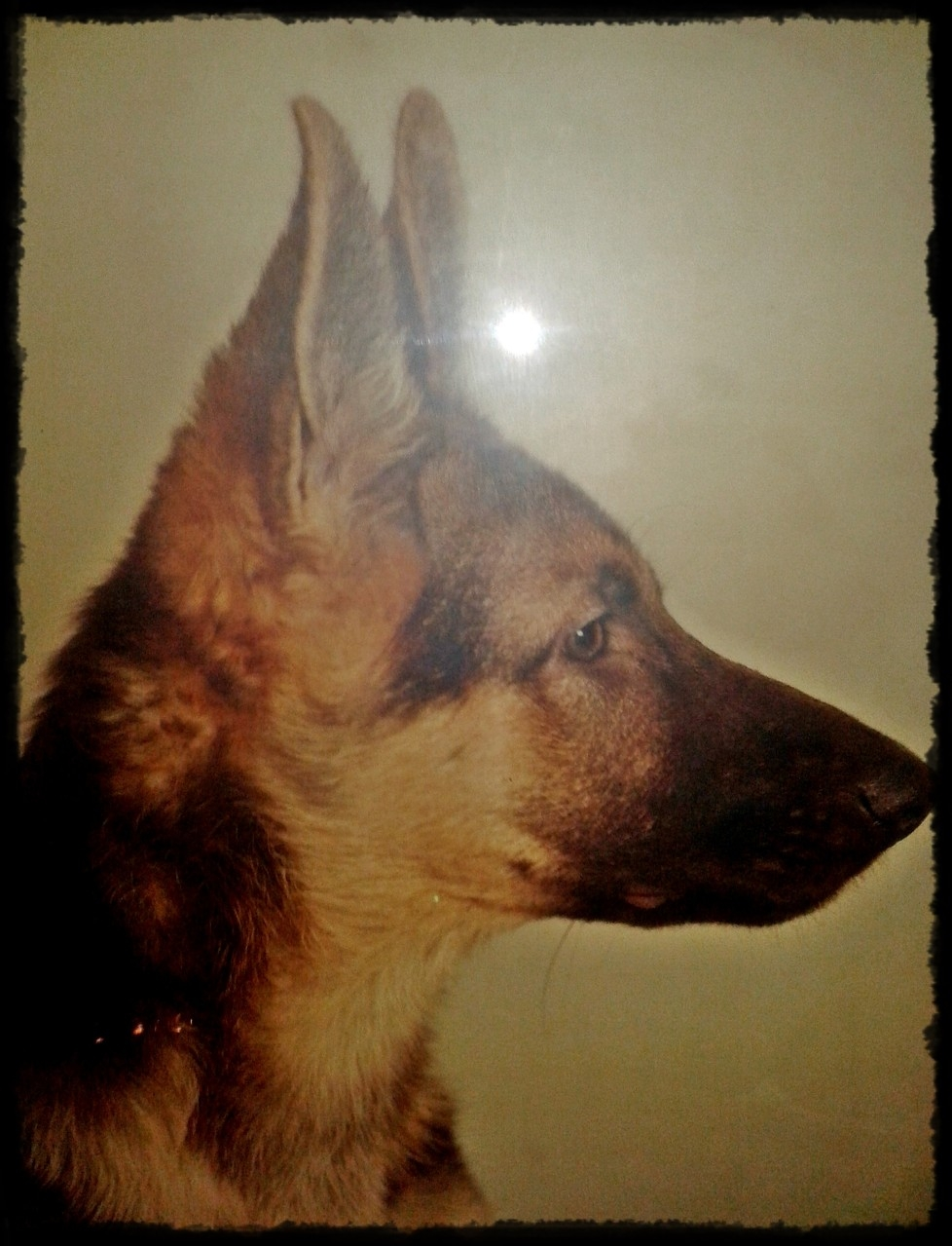 Pascha - er begleitete mich von 1983 bis 1992