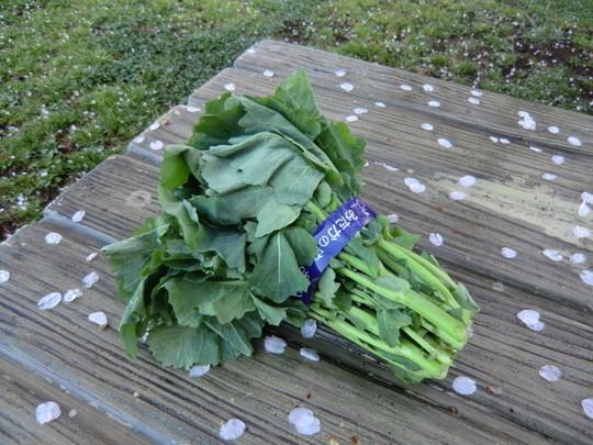 採れたての野菜を売るおばさんから「のらぼう」を分けていただいた(100円)。油で炒めると美味しい