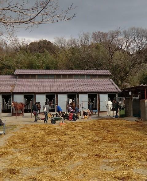 1月30日(2014) 国分寺崖線と野川遊歩道の間の場所にある東大馬術部の厩舎