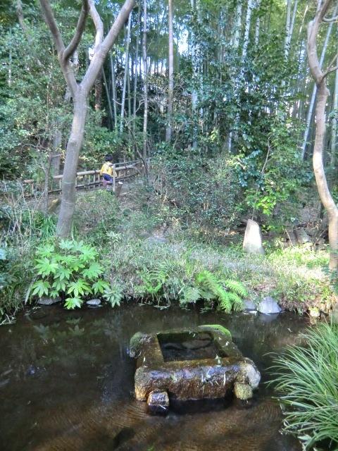 庭には水が湧き、風にそよぐ竹林にも癒される
