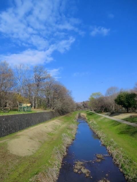 野川にかかる橋の上で撮影。上流に向かって川の左側が公園のメインだが、右側にも「自然観察園」などがある
