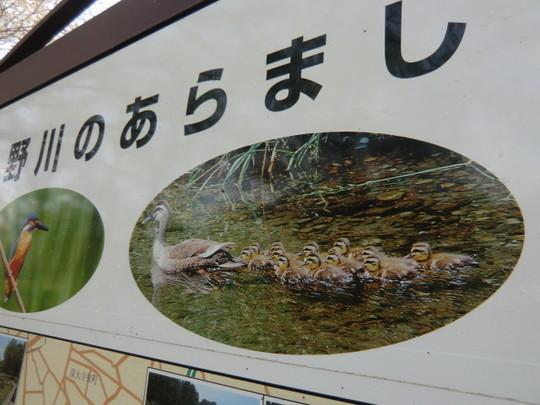 橋を渡ると自然観察園があり、ユーモラスな鴨の写真(絵?)が案内板にのっていた