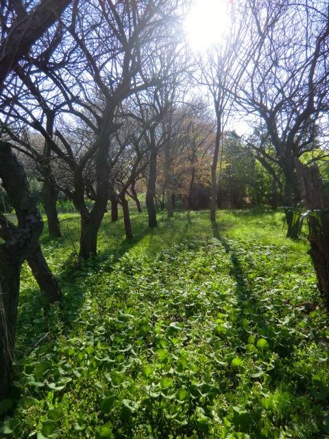 野川からちょっと小路に入るとこんな場所も。雑木林に武蔵野の面影を感じます