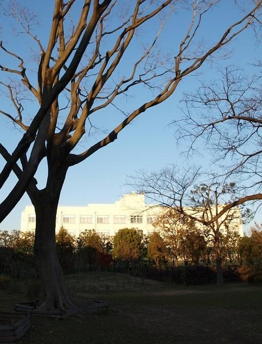 12月13日(2013) 冬木立と白い建物:武蔵野中央公園・花木園にて((武蔵野市)