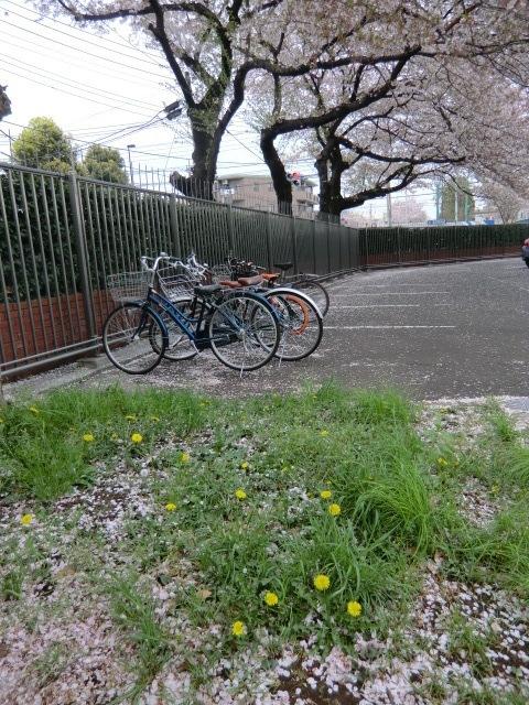 自転車を置き受付へ。タンポポが咲いていた