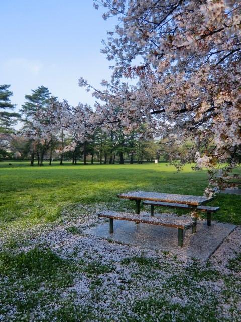 ベンチにかかった桜の花びら。まるで雪のようだった