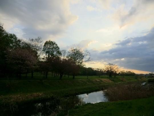 野川の夕暮れ。小探索レポートでした
