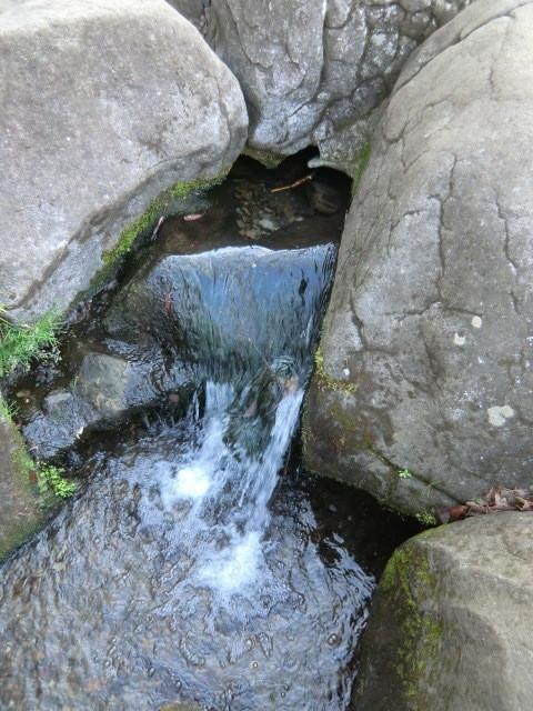 右岸には国分寺崖線の崖があり、湧水のわき出る場所がある