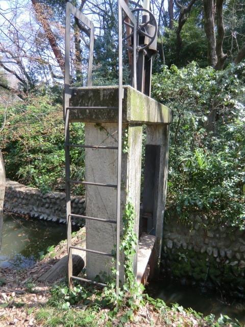 池の水門から野川に水が流れ出す