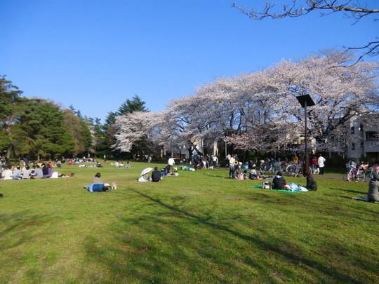 夕方近く、再び公園に行ってみると沢山の人がお花見を楽しんでいた。中には眠っている人も…。のどかな春の一日でした