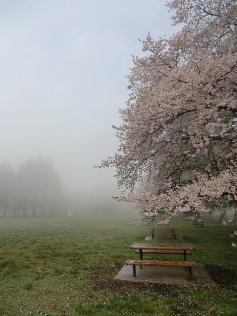 モヤにおおわれた早朝の公園