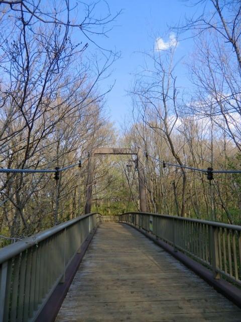 きすげ橋はなんと吊り橋でした