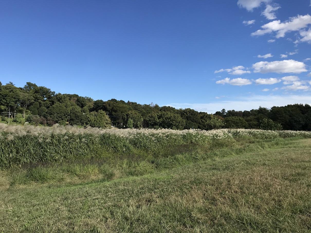 10月18日(2013) 木の影(武蔵野の森公園:修景池)