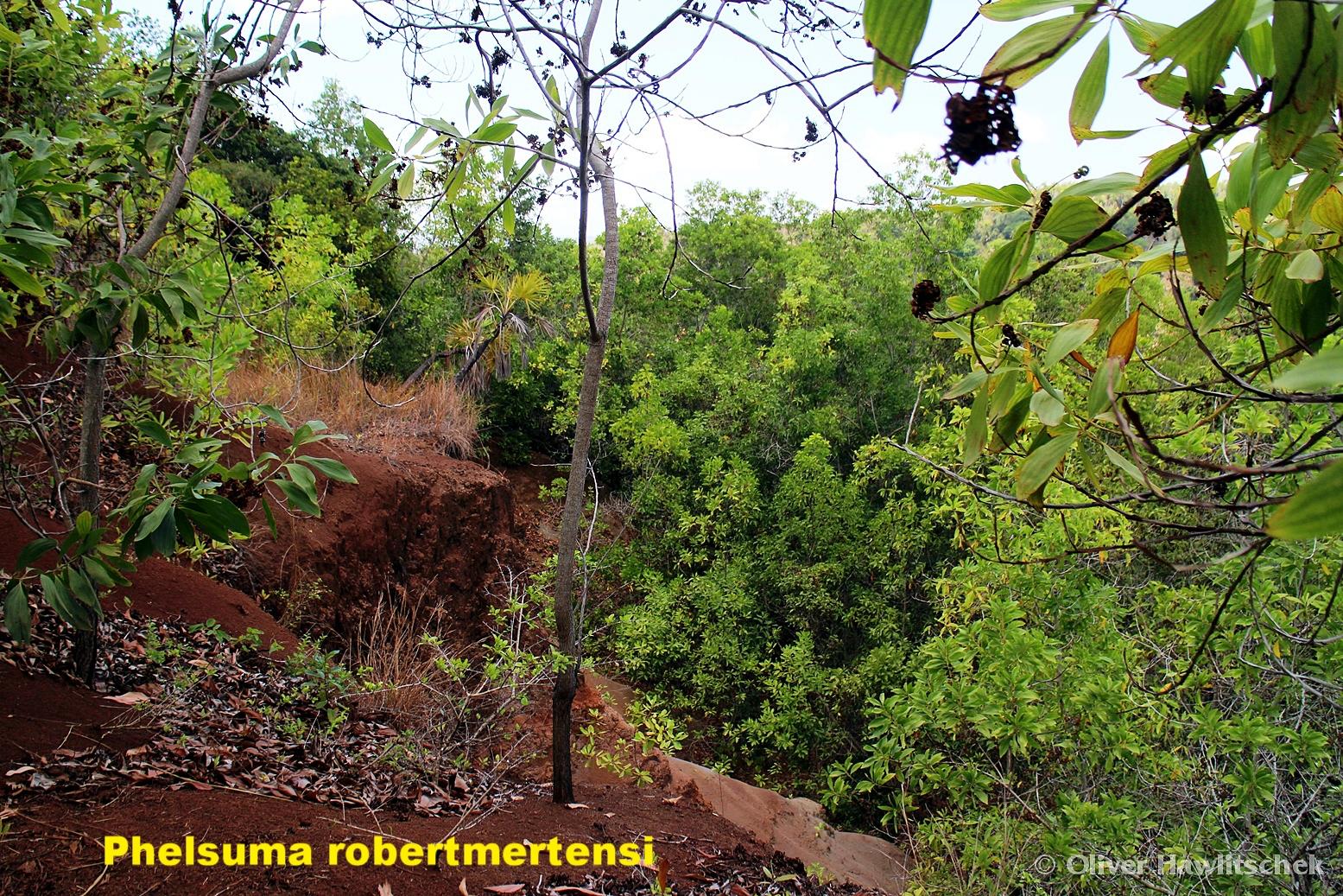 Trockenwälder und Büsche - (Mayotte-Komoren)