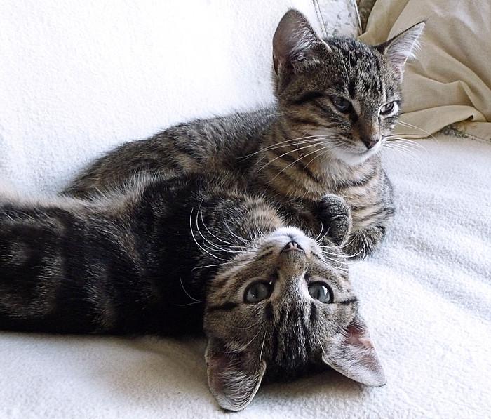 Maja und Kira