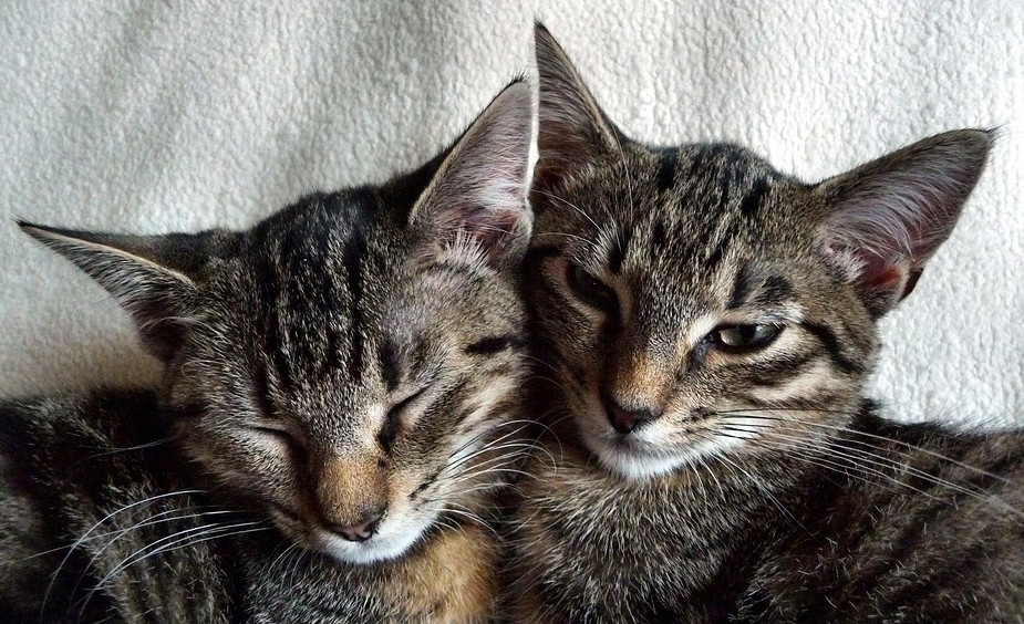 Love (Maja und Kira)