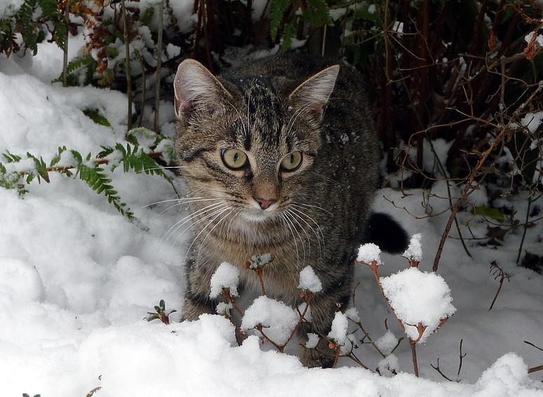 Kira im Schnee