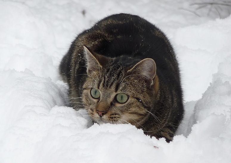 Maja im Schnee