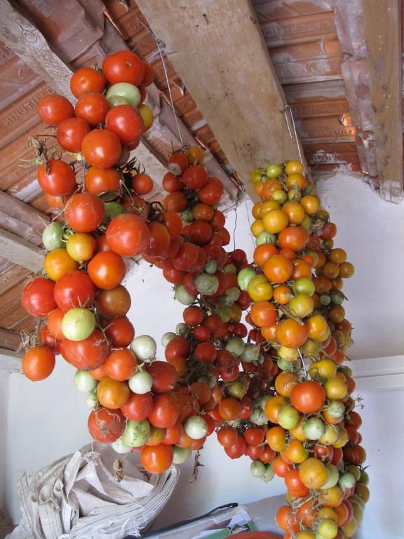 Tomaten für den Winter aufbewahrt