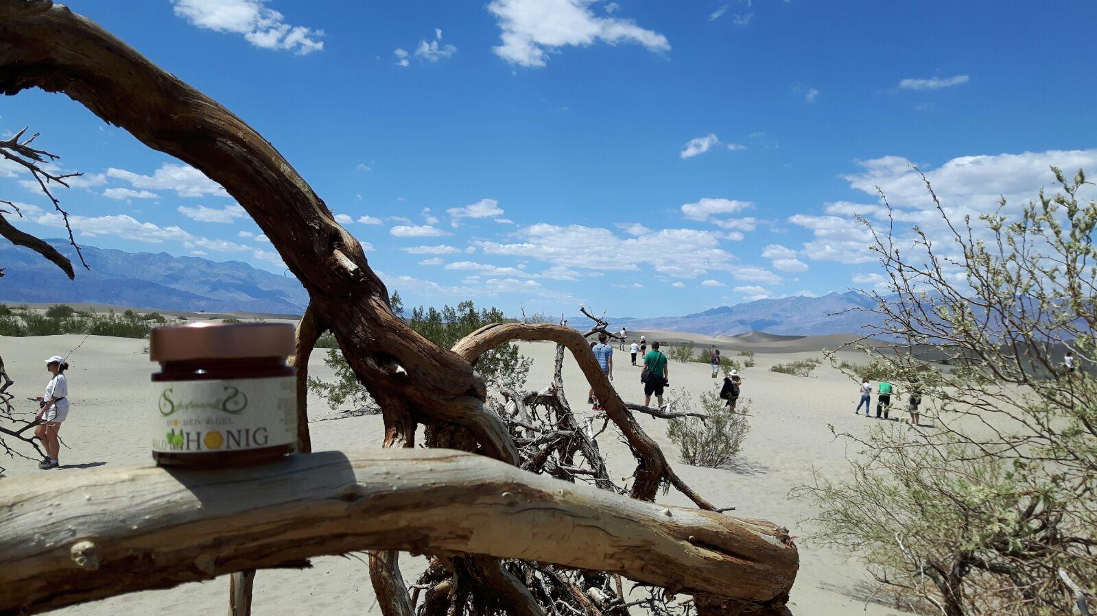 Honey in death valley mosquite flat sand dunes