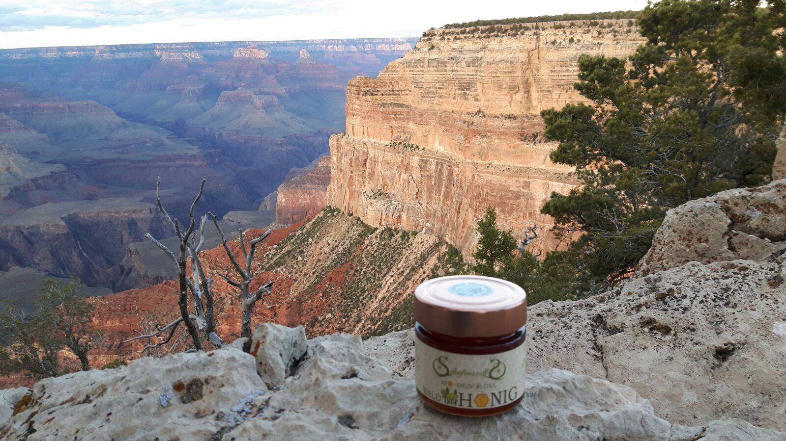 Schöner Ausblick für unseren Honig in Grand Canyon - mohave point