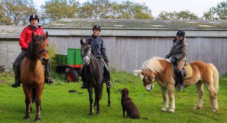 Ausritte in den Forst klövensteen, Pferde mieten