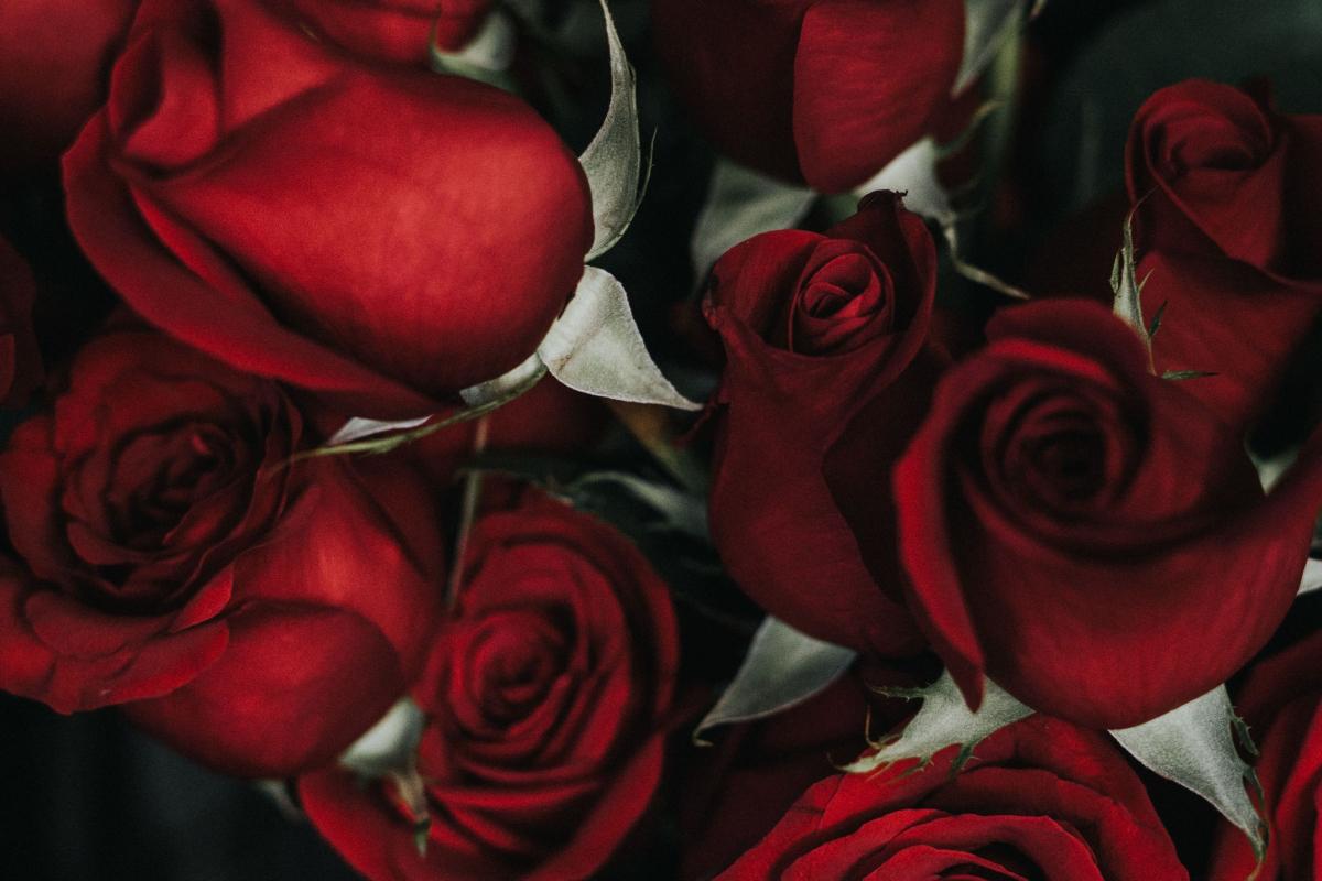 Valentinstag – Der Tag der Liebe und Freundschaft