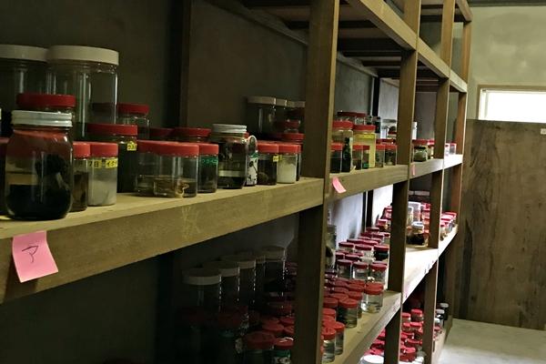 周辺で採取されたキノコの標本を整理。