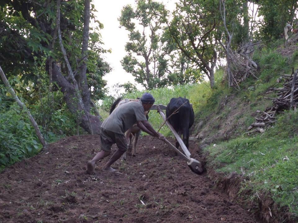 La plupart de villageois travaillent  la terre pour subvenir à leurs besoins.