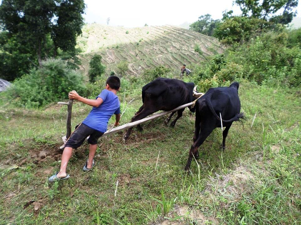 Avant de partir en classe, il faut travailler les champs.