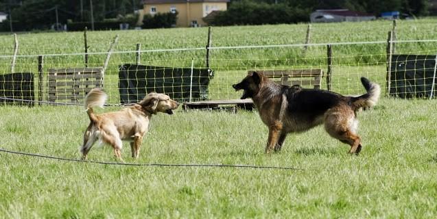communication entre Hatchy et Eris