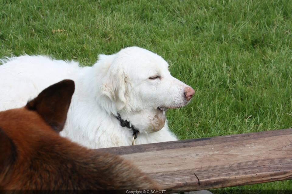 Twiggy et Galla