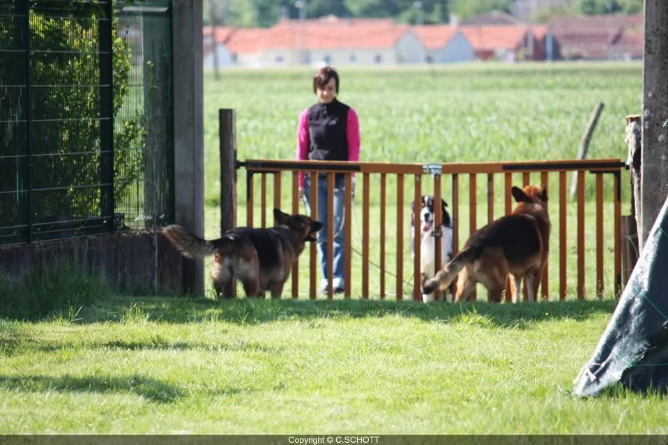 """lors du travail au portail, la gestuelle du maître est très importante afin de ne pas renforcer le chien lors de comportement """"inadaptés"""" de ce dernier face aux signaux envoyés par les chiens régulateurs et les autres chiens déjà présents sur le terrain"""