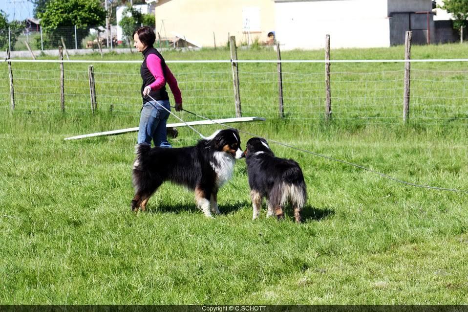 ici aussi la gestuelle et les déplacements du maître sont importants lors de la présentation des chiens...