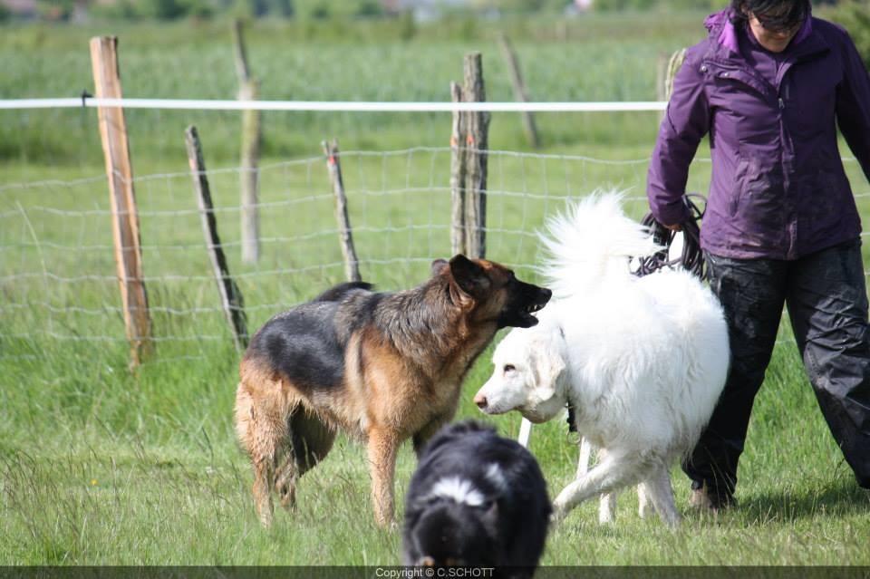 communication entre Eris et Galla: Sonia, la maitresse de Galla, se décale pour ne pas influencer sa chienne dans cette communication